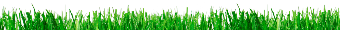 grass image - for web
